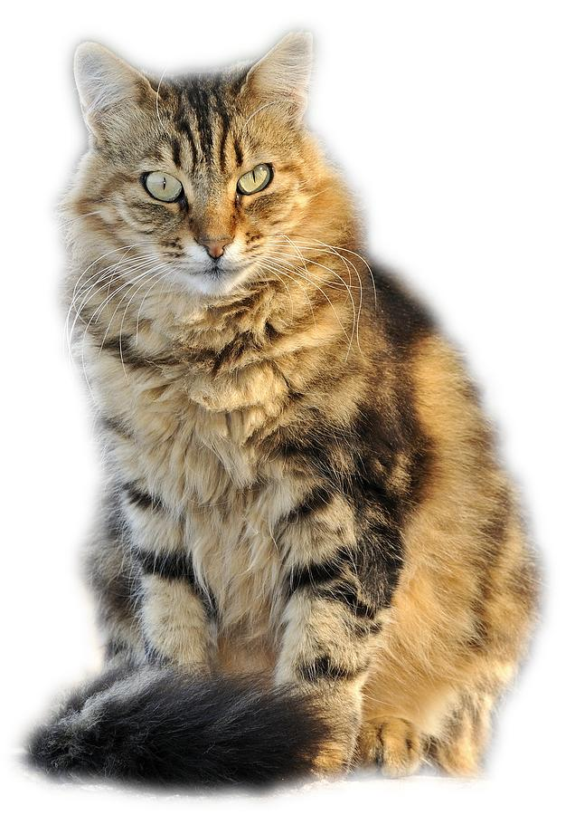 Clothing Photograph - Sitting Cat by George Atsametakis