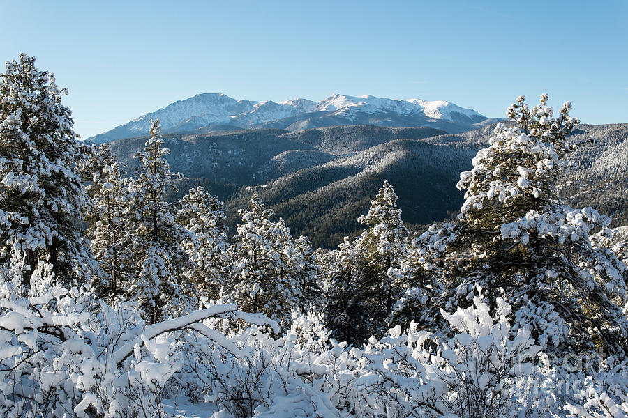 Snow In The Pike National Forest Photograph