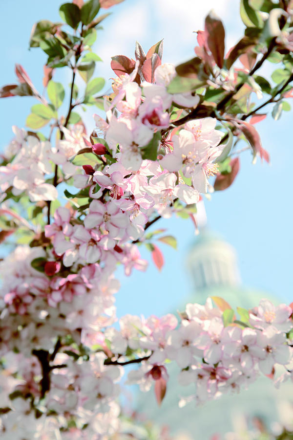 Spring Flowers At The Indiana State House In Indianapolis India
