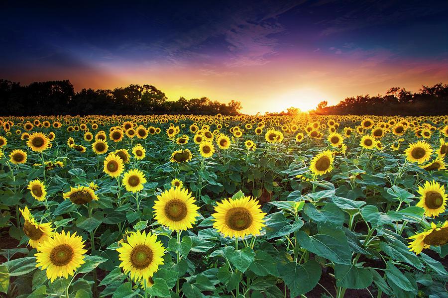 Sunset Photograph - 3 Suns by Edward Kreis