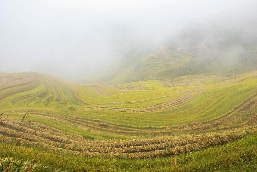 Terrace Photograph - Terrace Fields Scenery In Autumn by Carl Ning
