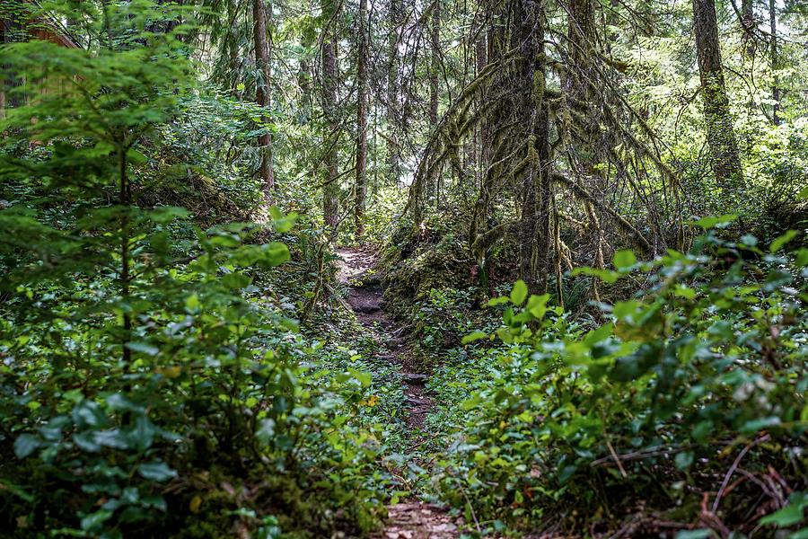 Oregon Photograph - Thickly Wooded Area by Ric Schafer