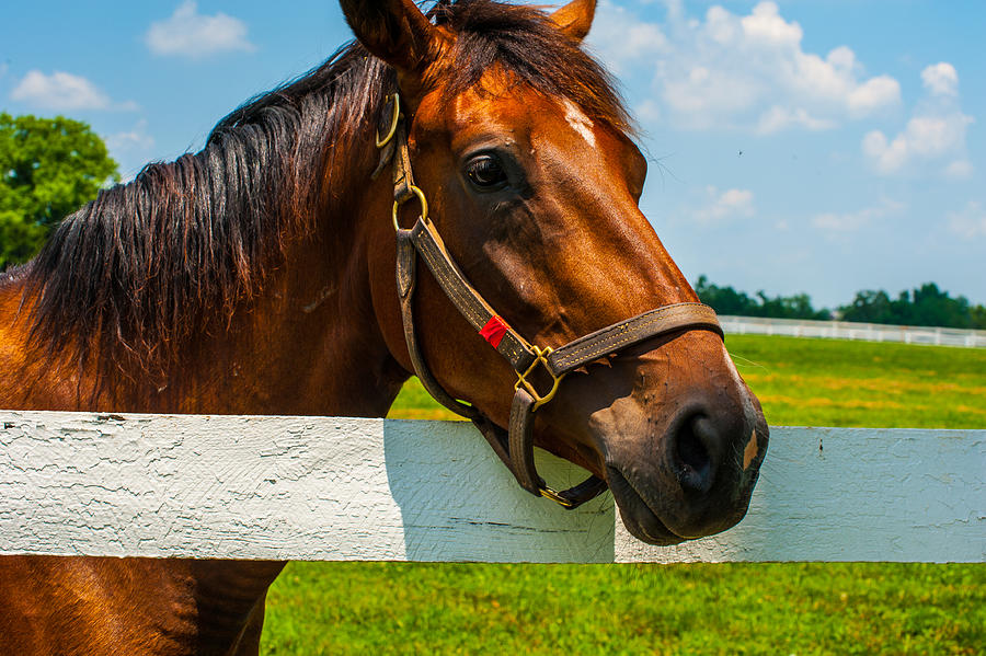 Horse Photograph - Thoroughbred by Barry Fowler
