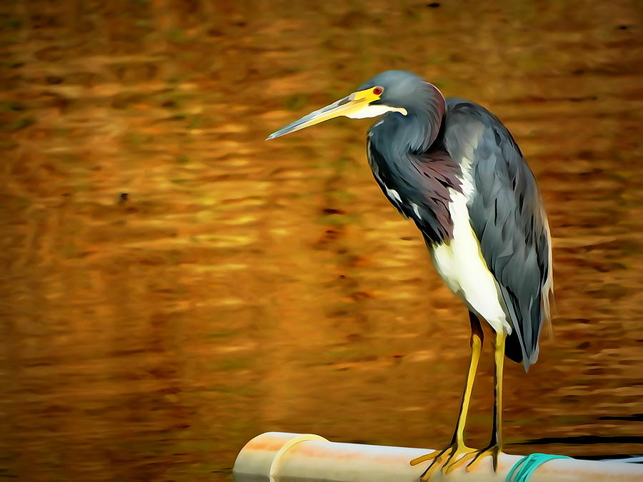 Tricolor Mixed Media - Tricolored Heron  by Ines Ganteaume