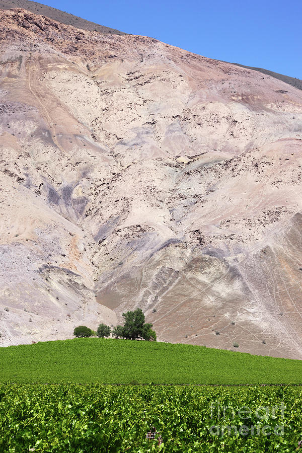 Chile Photograph - Vines In The Atacama Desert Chile by James Brunker