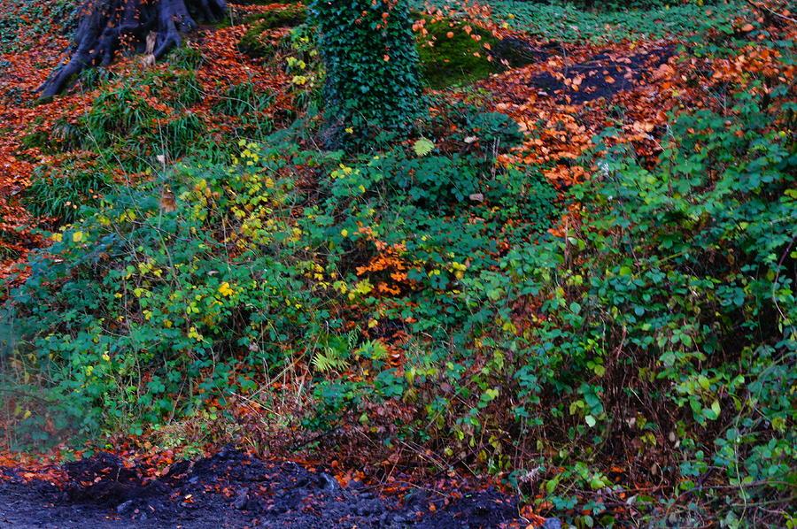 Edinburgh Photograph - Wet Leaves by Nik Watt