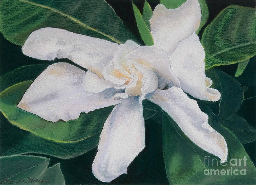 White Flower Painting - White Camelia by Lucinda  Hansen