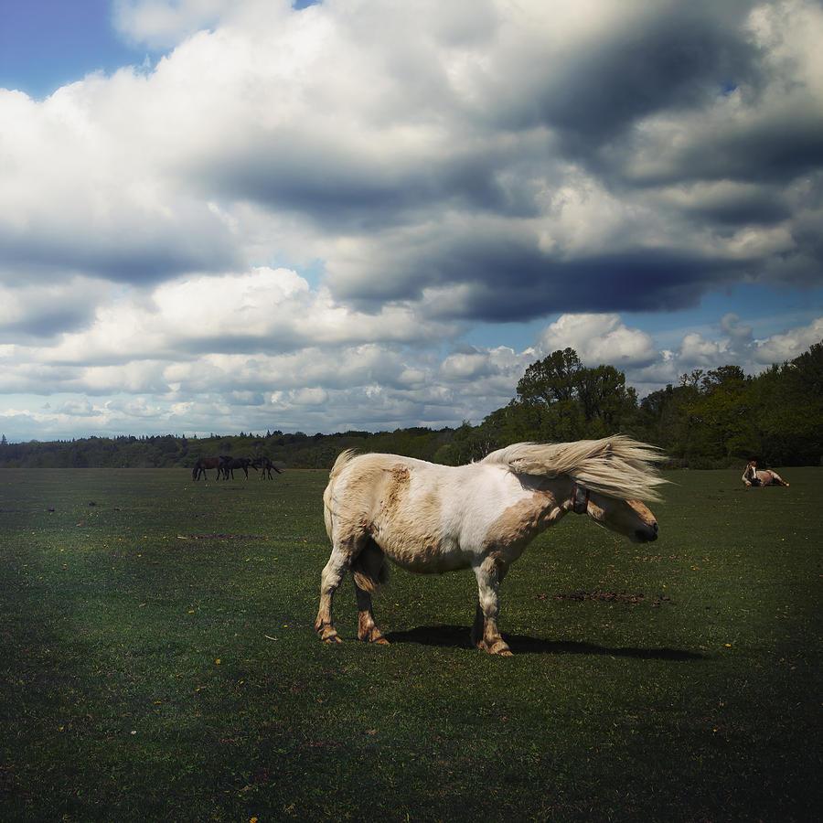 Pony Photograph - Windy Day by Joana Kruse