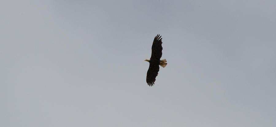 Washington Photograph - Wings Spread by Linda Kerkau