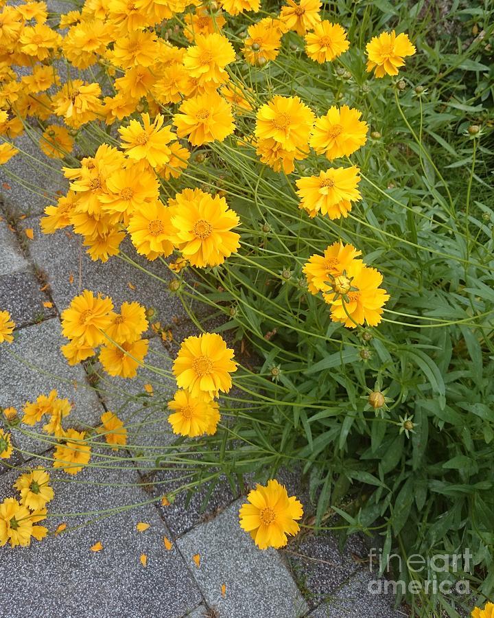 Yellow Photograph - Yellow Flowers by Sobajan Tellfortunes