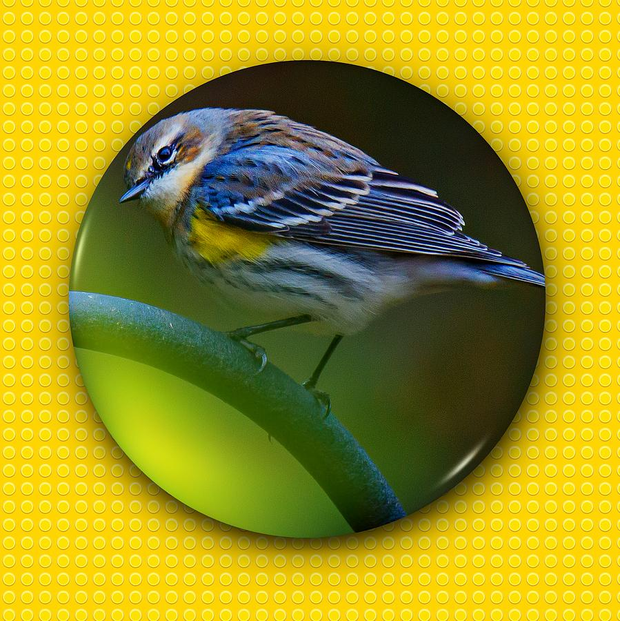 Yellow-rumped Warbler by Robert L Jackson