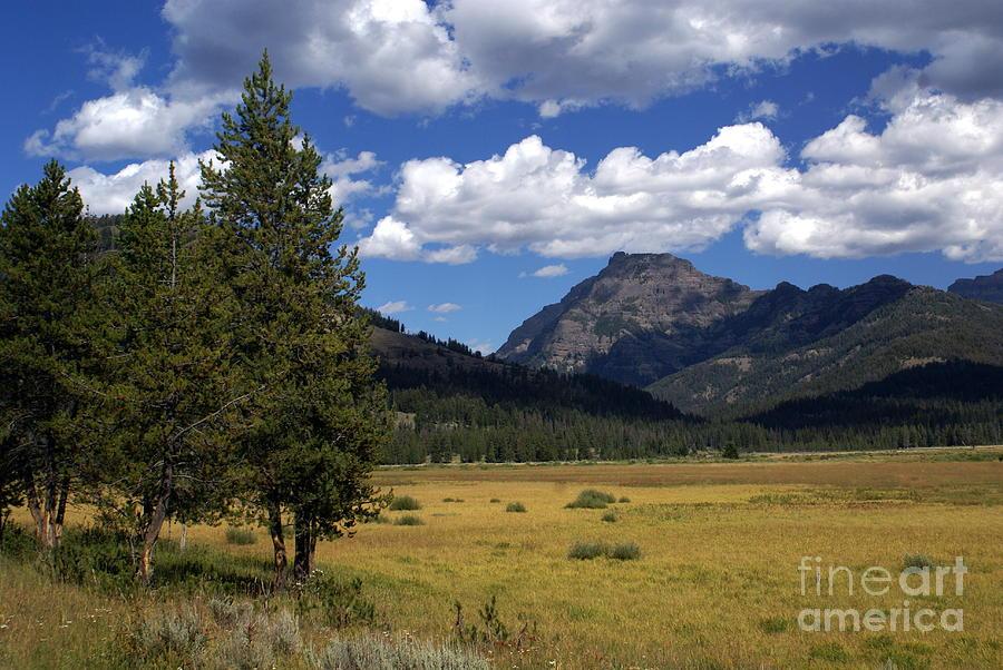 Yellowstone National Park Photograph - Yellowstone Vista by Marty Koch