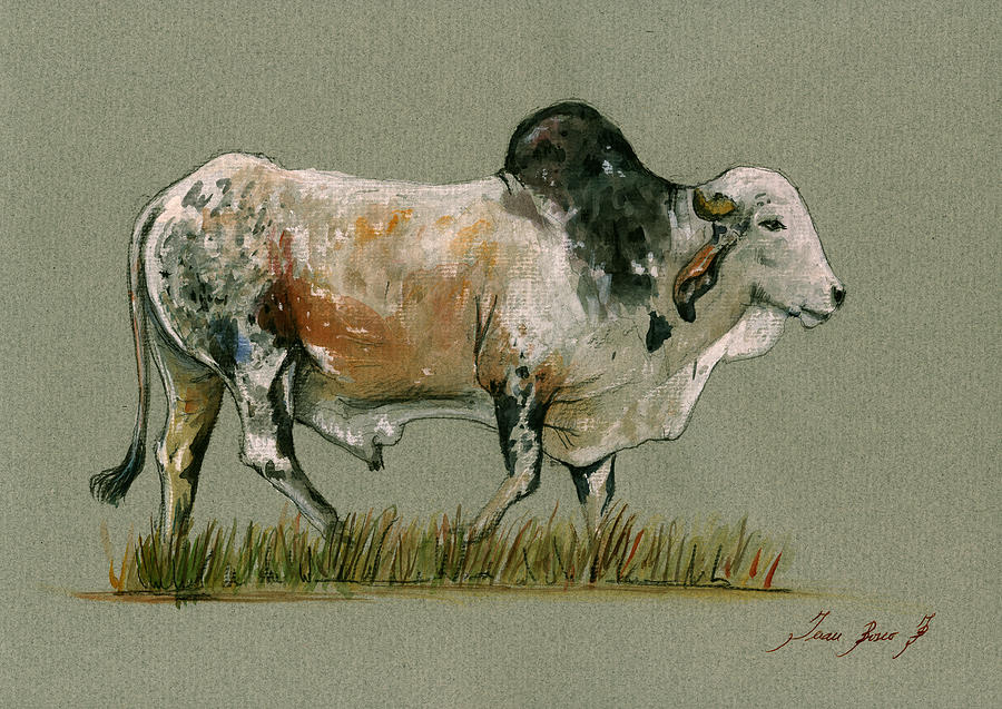 Zebu Painting - Zebu Cattle Art Painting by Juan  Bosco