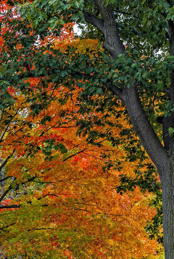 Fall Foliage Photograph
