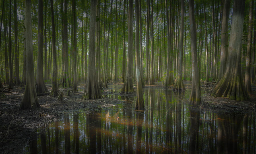 Fish Eating Creek Photograph - Untitled by Bill Martin