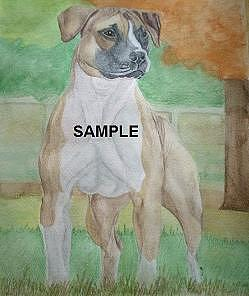 Pit Bull Terrier Painting by Billie Riholm