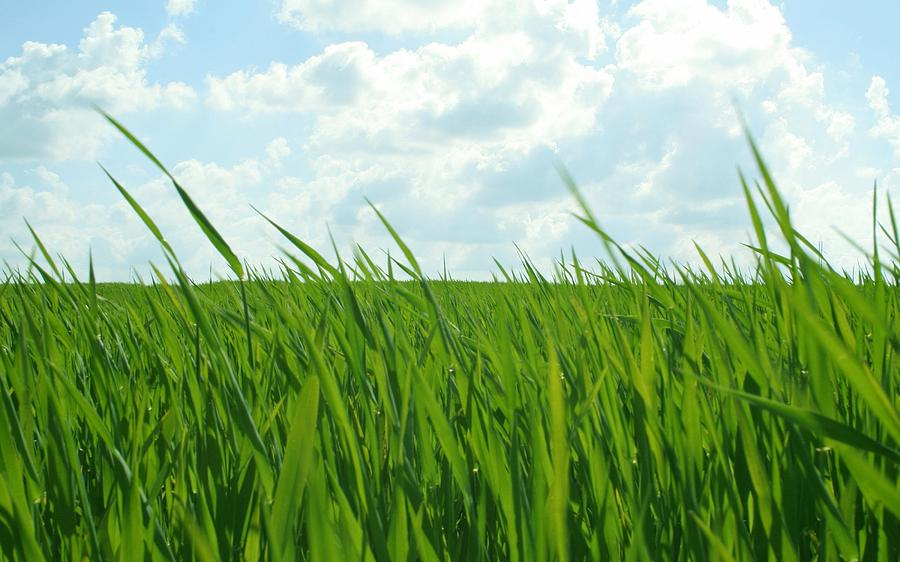 38744 Nature Grass Digital Art by Mery Moon
