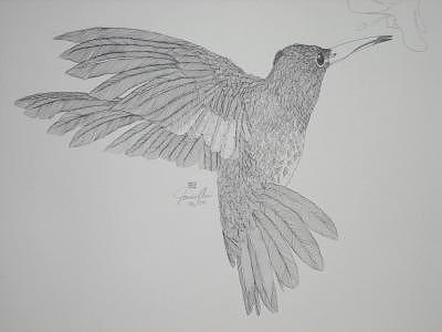 Limited Edition Drawing - Hum Hum Hummer by Joanie Arvin