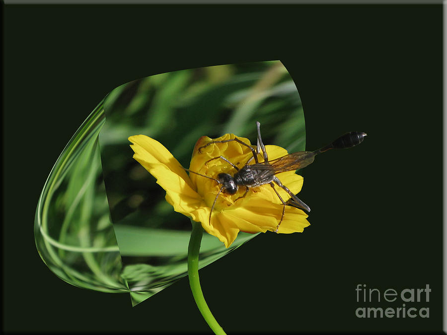 Wasp Photograph - 3d Wasp by Donna Brown