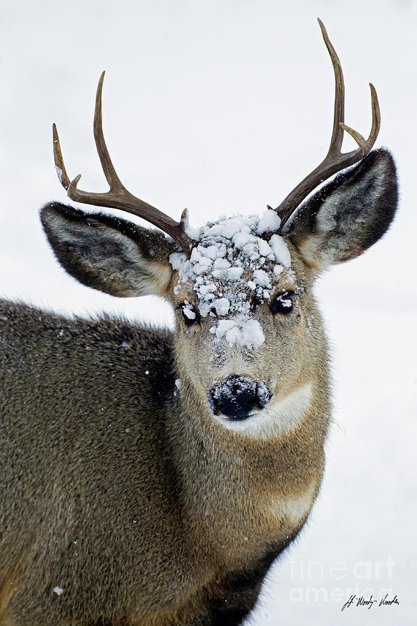 Deer Photograph - 3x3 Mule Deer Buck-signed-#8800 by J L Woody Wooden