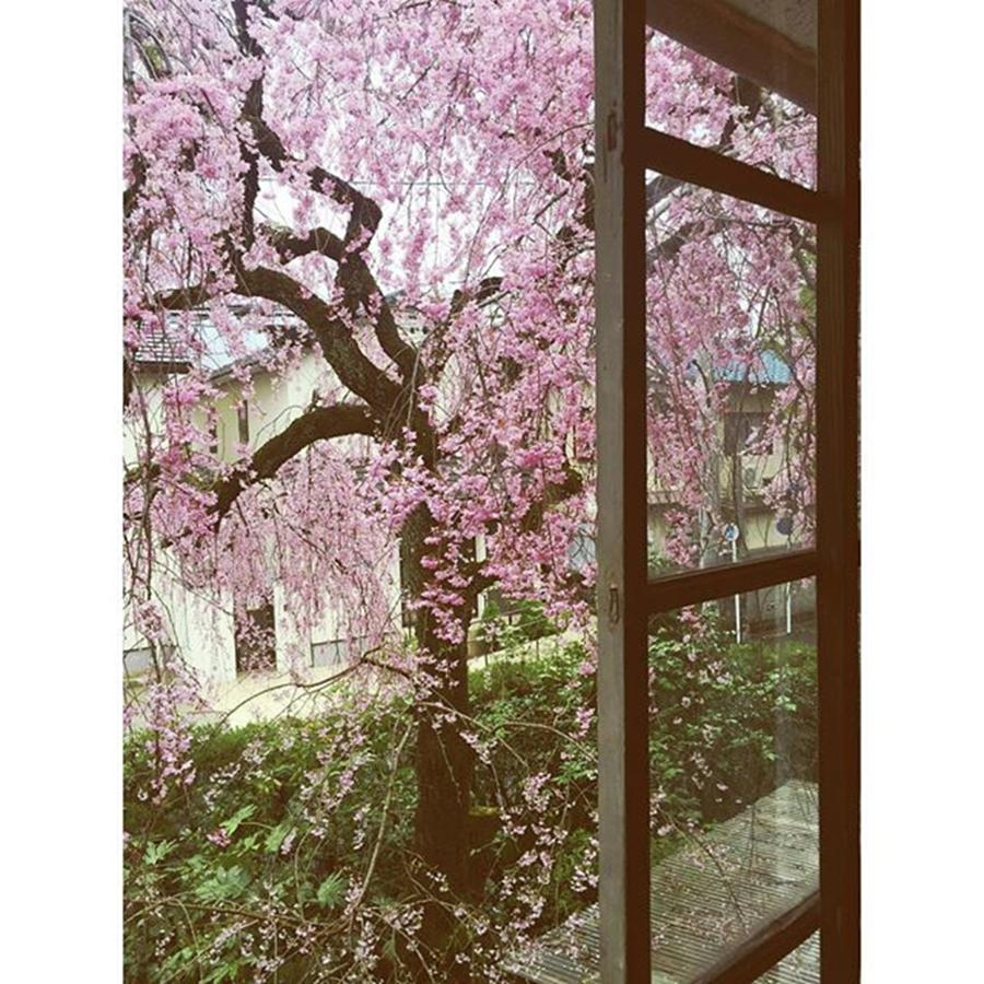 Pink Photograph - Cherryblossom by Tae Shimoide