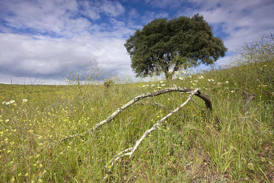 Alentejo Photograph - Alentejo by Andre Goncalves
