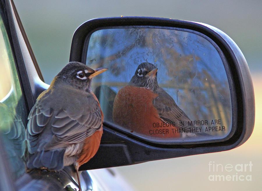 American Robin Photograph - American Robin by Gary Wing