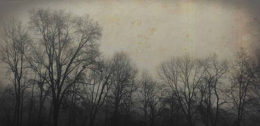 Winter Photograph - Bare Branch Horizon by JAMART Photography