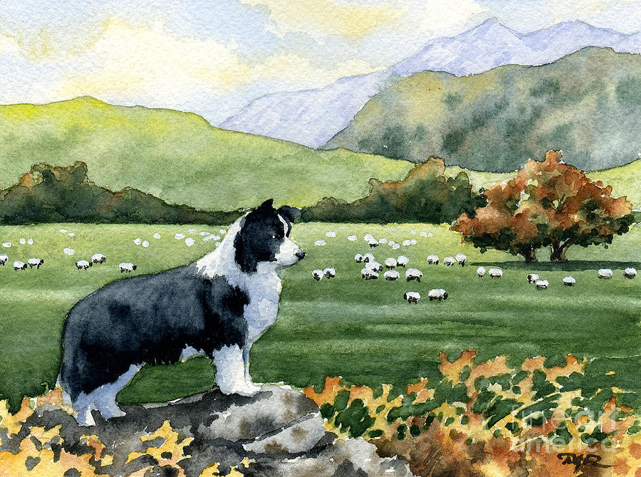 Border Painting - Border Collie by David Rogers