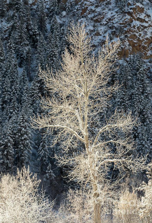 Colorado Winter Photograph