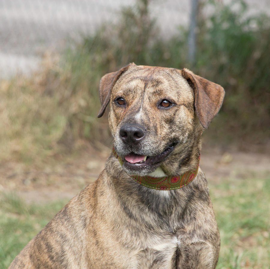 Dog Photograph - Dog At Satchels Last Resort by Richard Goldman