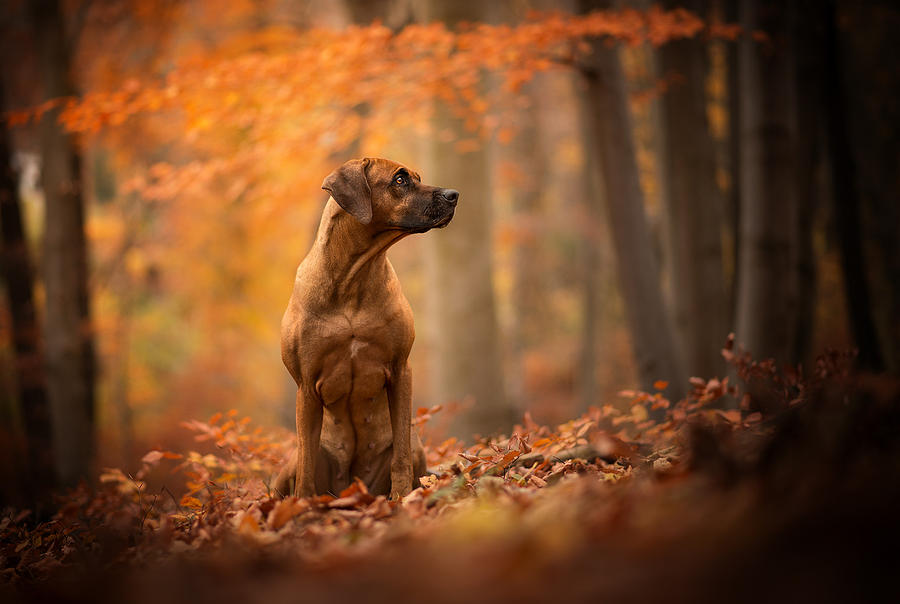 Dog Digital Art - Dog by Dorothy Binder