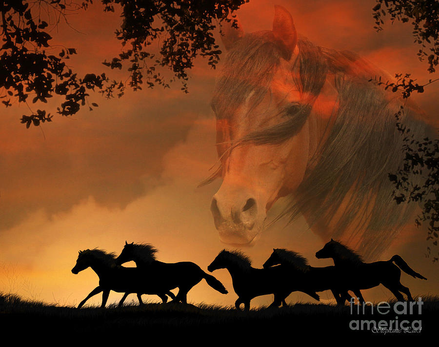 Horse Photograph - 4-ever Free by Stephanie Laird