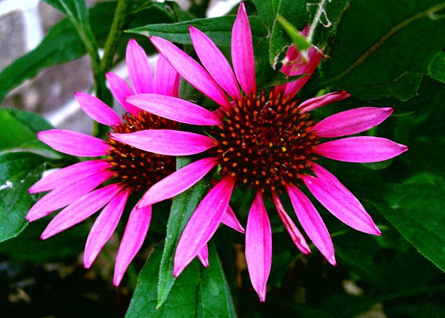 Flowers Photograph - Flowers by Robert Cunningham