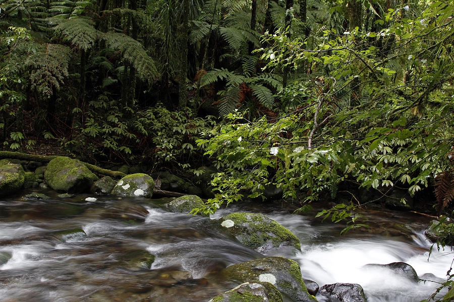 Creek Photograph - Forest Stream by Les Cunliffe