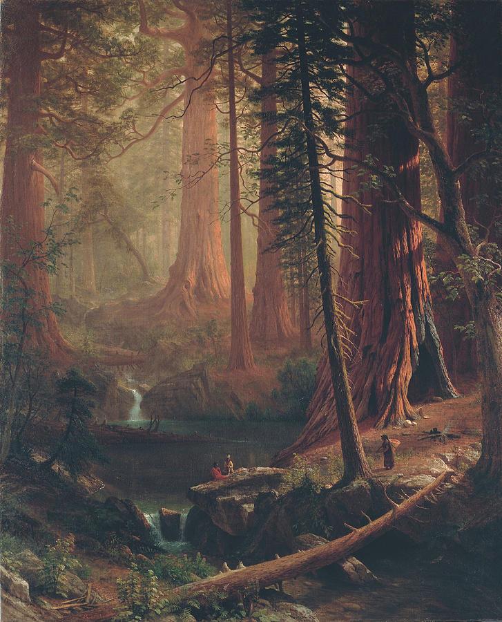 Albert Bierstadt Painting - Giant Redwood Trees Of California by Albert Bierstadt