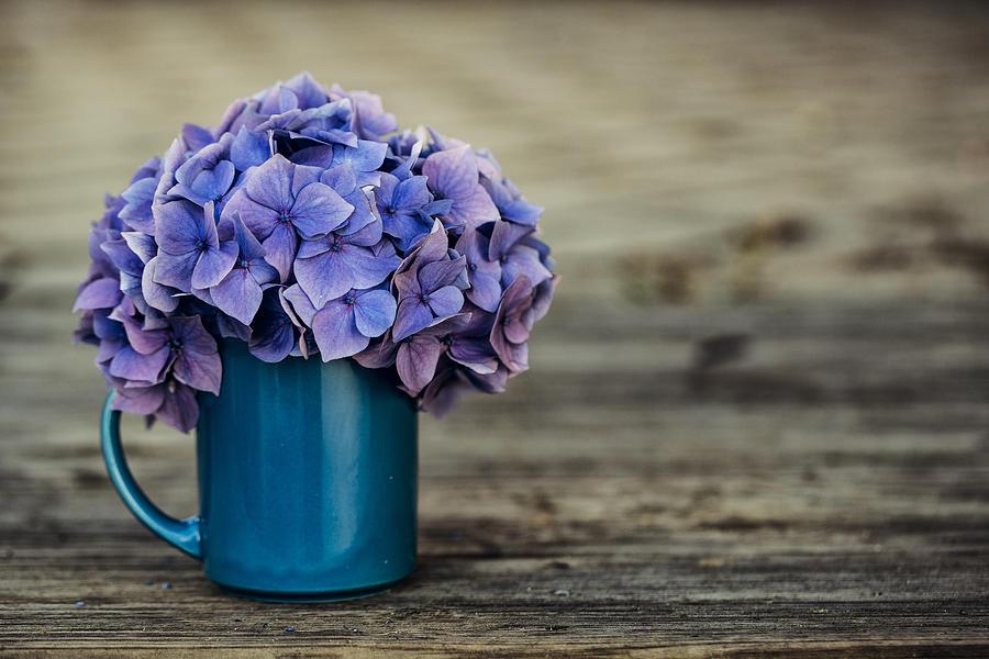 Hortensia Photograph - Hortensia Flowers by Nailia Schwarz