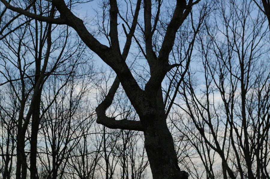 Trees Photograph - 4 by Jessica Pettit