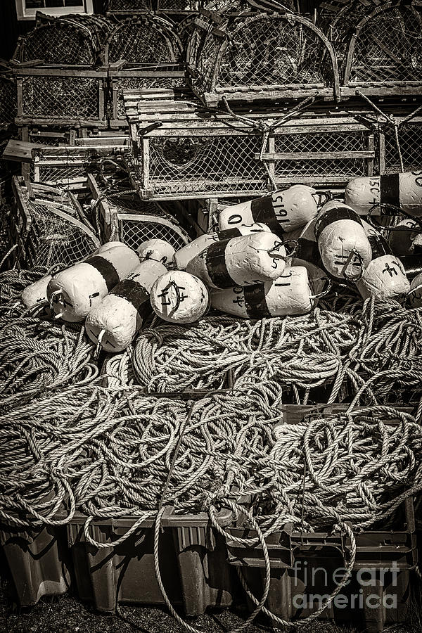 Floats Photograph - Lobster Traps by Elena Elisseeva