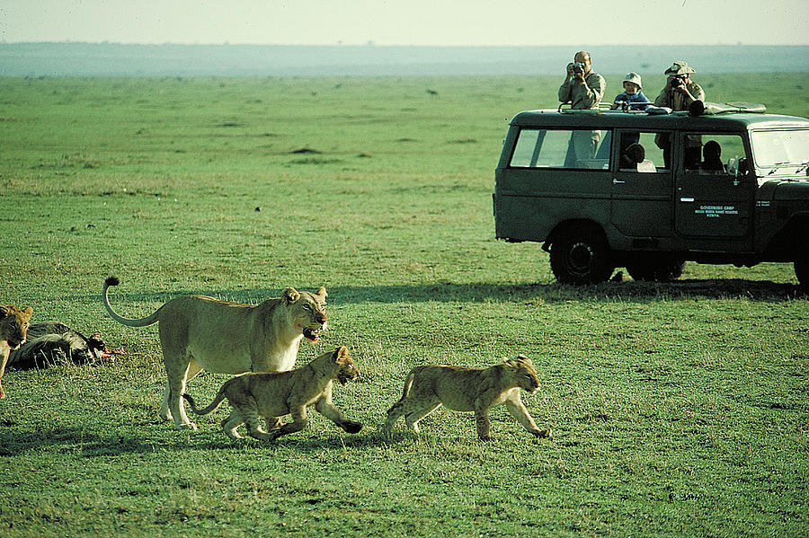 Land Rover Photograph - Lunch With The Kids by Carl Purcell