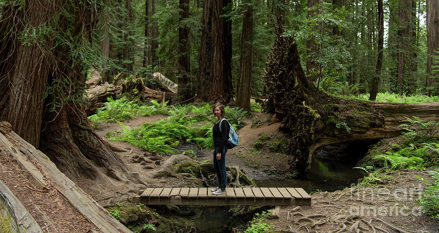 State Park Photograph - Montgomery Woods State Natural Reserve by David Oppenheimer