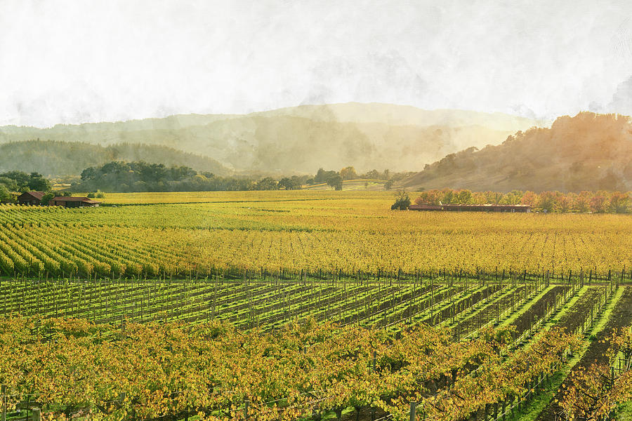 Napa Valley California in Autumn by Brandon Bourdages