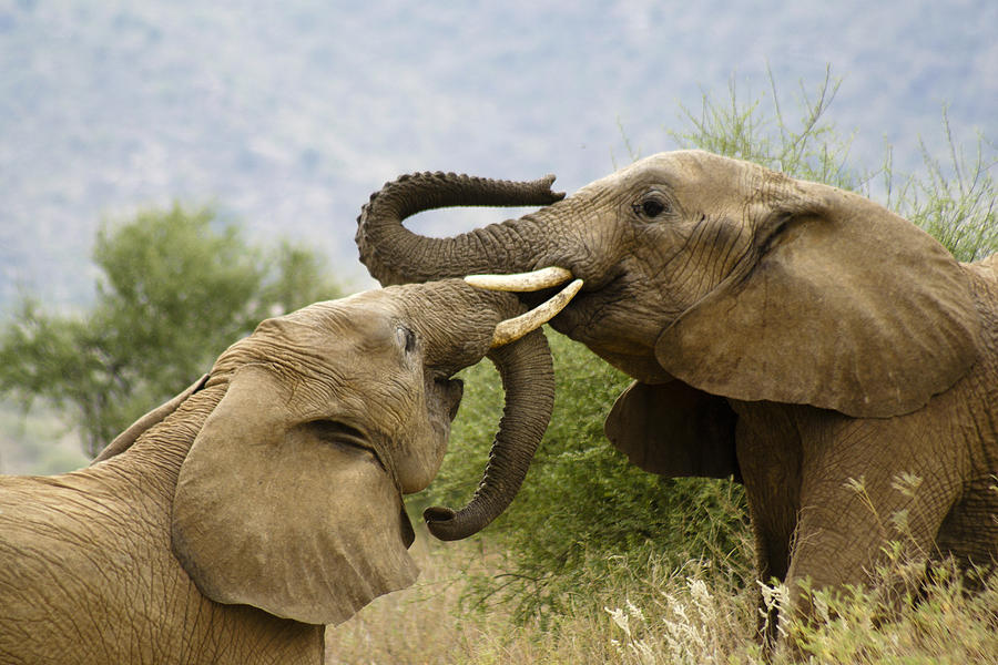 Africa Photograph - Playtime by Michele Burgess