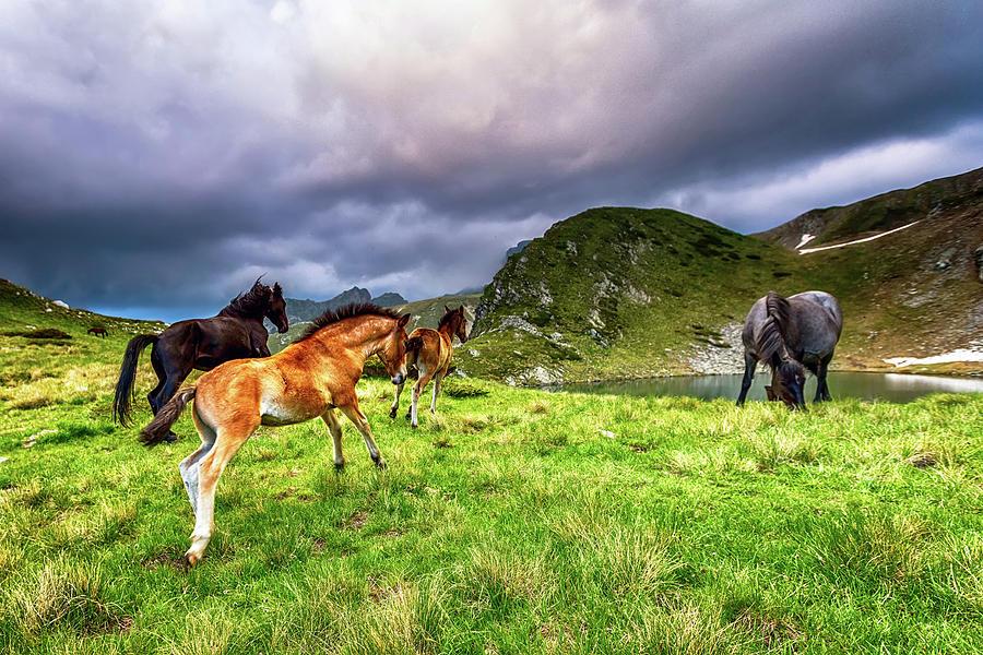Animal Photograph - Rila Mountain by Evgeni Dinev