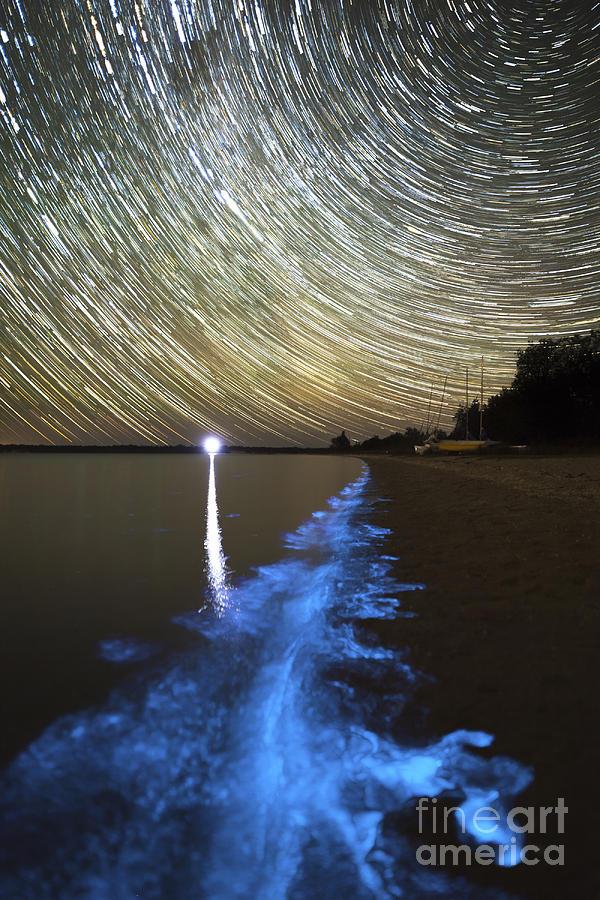 Bioluminescence Photograph - Star Trails And Bioluminescence by Philip Hart