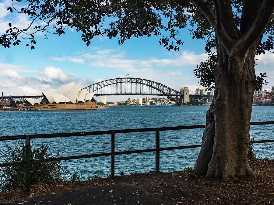 Sydney Harbor by Walt Sterneman