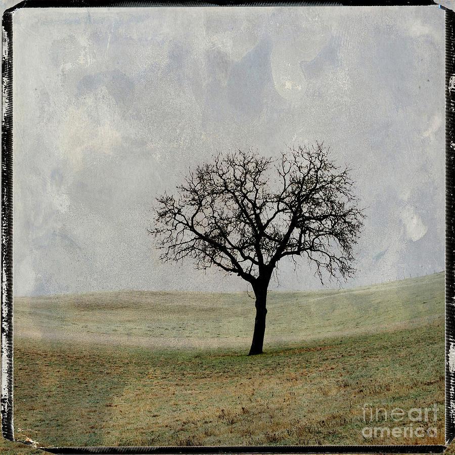 Texture Photograph - Textured Tree by Bernard Jaubert