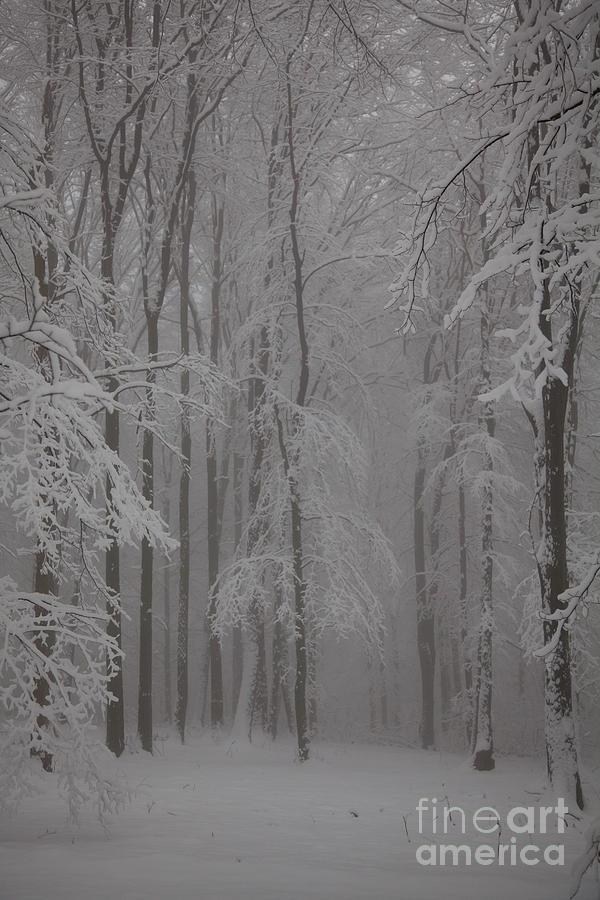 Winter Photograph - Winter by Gabriela Insuratelu