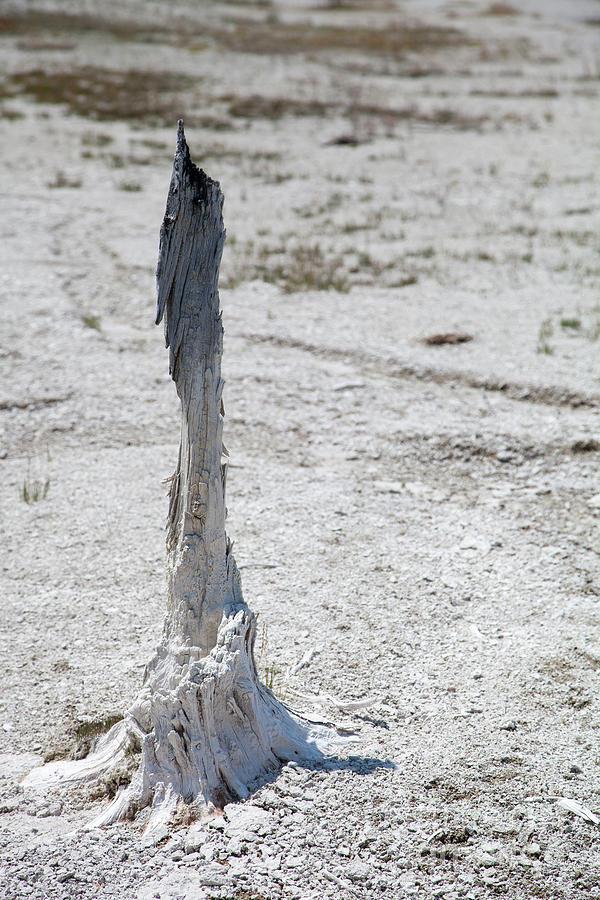 Yellowstone Photograph - Yellowstone National Park by Kati Finell
