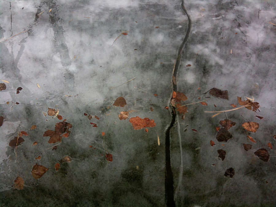 Leaf Photograph - A Moment Of My Day by Sara Efazat